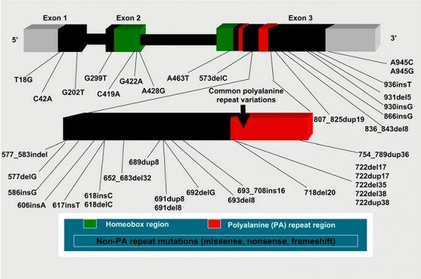 Gen PHOX2B