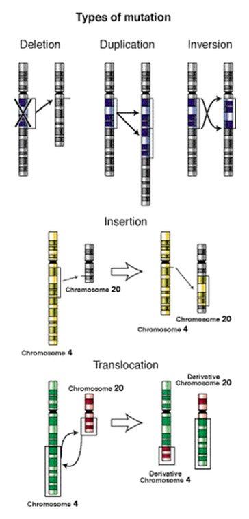 Tipos de mutación